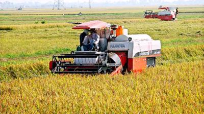MARD proposes increase to rice reserves