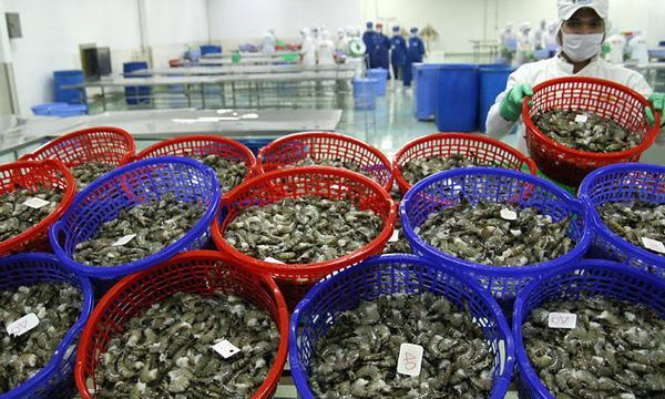 Đợt dịch Covid – 19 mới đe doạ thuỷ sản xuất khẩu của Việt Nam