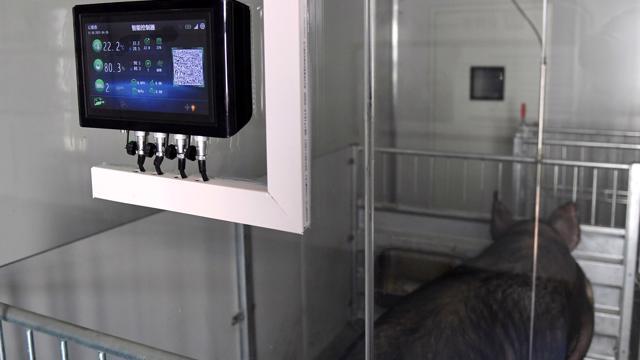 """Trung Quốc: Lợn được nuôi trong """"khách sạn"""" cao tầng"""