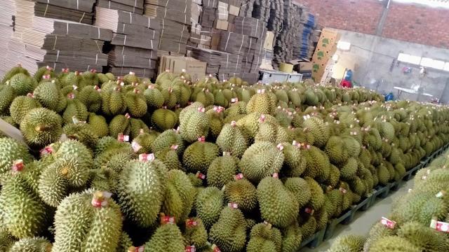Doanh nghiệp xuất khẩu trái cây có nguy cơ mất thị trường.