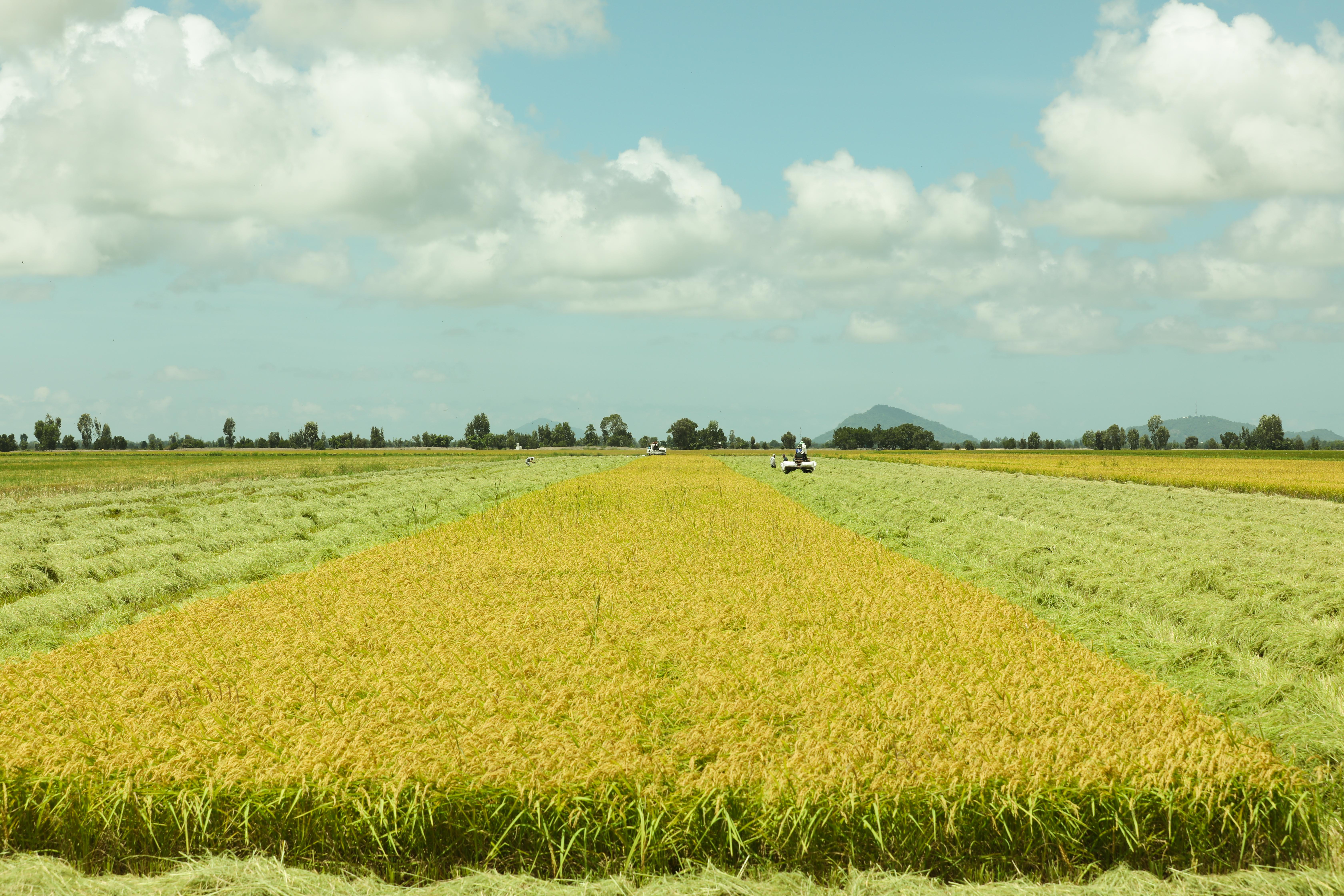 Tập đoàn Tân Long hiện bao tiêu sản phẩm với nông dân tại các tỉnh miền Tây của Việt Nam.