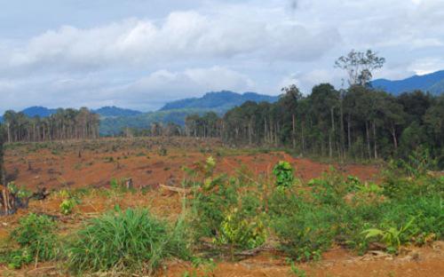 Hơn 600 nông lâm trường với diện tích đất được giao gần 8 triệu ha, song mỗi năm chỉ nộp ngân sách được khoảng 180 tỷ đồng.<br>