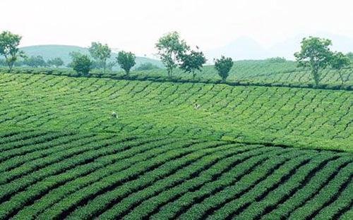 Theo báo cáo của Bộ Nông nghiệp và Phát triển nông thôn, diện tích đất  tranh chấp giữa lâm trường và người dân tính đến hết năm 2011 là khoảng  76.000 ha.