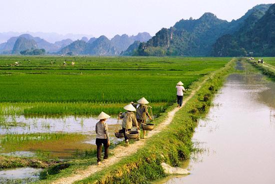 Số thu thuế sử dụng đất nông nghiệp hàng năm bình quân chỉ còn khoảng 67,3 tỷ đồng/năm.