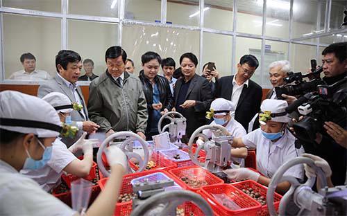 Một xưởng chế biến mắc-ca tại Liên Nghĩa, Lâm Đồng.<br>