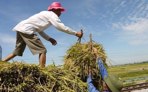 Hạn chế được Chính phủ chỉ ra là cơ sở hạ tầng kinh tế - xã hội ở nhiều vùng nông thôn còn yếu kém, nhất là các vùng miền núi, chưa đáp ứng yêu cầu xóa đói, giảm nghèo và phát triển theo hướng công nghiệp hóa - hiện đại hóa.