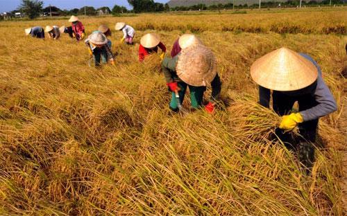 Thị trường gạo châu Á, trong đó có Việt Nam, tuần qua ảm đạm do khách  mua đứng ngoài thị trường trước kỳ nghỉ lễ, giá gạo xuất khẩu cũng ít  biến động.