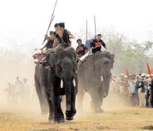 Lễ hội đua voi ở Tây Nguyên.