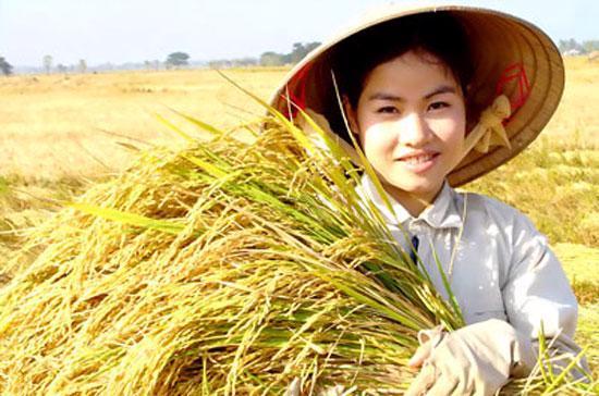 Gạo Việt Nam vững giá trên thị trường xuất khẩu thế giới tuần qua do được hỗ trợ bởi kế hoạch mua gạo tạm trữ của Chính phủ trước khi vụ thu hoạch lúa hè thu ở ĐBSCL bước vào cao điểm.