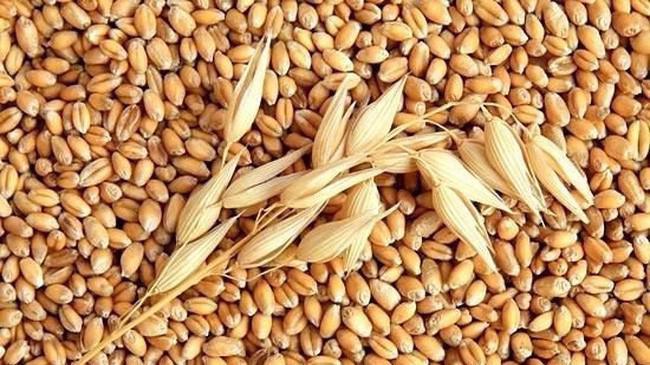 Trong 7 tháng đầu năm 2018, Việt Nam đã nhập khẩu 3,13 triệu tấn lúa mì, tương ứng 743 triệu USD, tăng 2,2% về khối lượng và tăng 16,6% về giá trị so với cùng kỳ năm 2017.