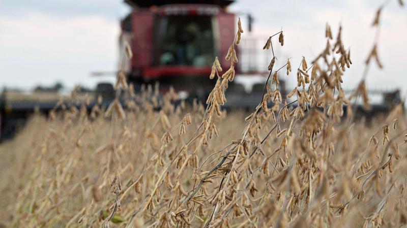 Trên một trang trại trồng đậu tương ở Mỹ - Ảnh: Bloomberg/Getty/CNBC.