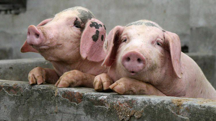 Trung Quốc là nước sản xuất và tiêu thụ thịt lợn lớn nhất thế giới.