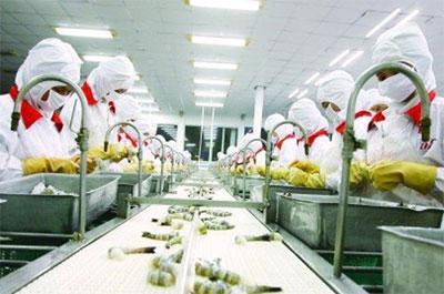 Chế biến tôm xuất khẩu tại một doanh nghiệp. Nhu cầu tiêu thụ thủy sản của một số nước châu Phi là rất lớn, nhưng doanh nghiệp Việt Nam không đáp ứng được - Ảnh: Lê Toàn.