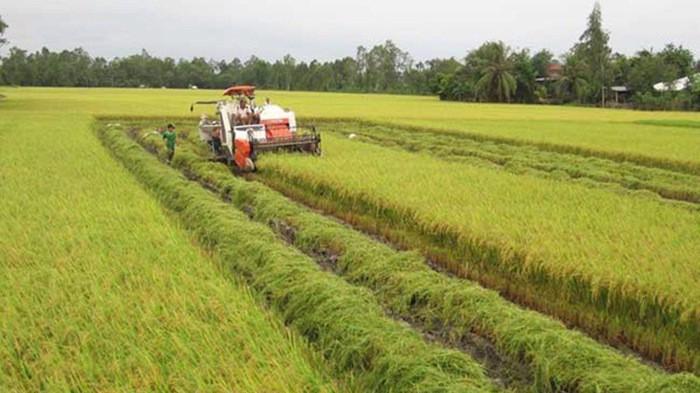 Nnhiều doanh nghiệp mua lại quyền sử dụng đất nông nghiệp từ nông dân, nhưng phải chuyển nhượng rất lòng vòng.