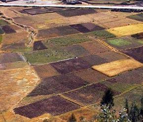 Các nước thành viên của FAO sẽ được cập nhật liên tục thông tin về khí hậu, hạn hán, cháy rừng hoặc mất cân bằng sinh thái tại khu vực đất nông nghiệp của mình.