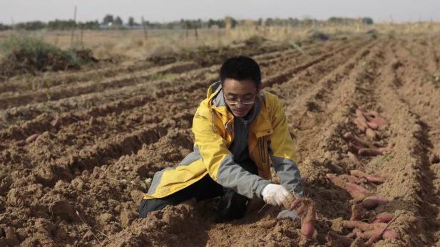 Một trí thức trẻ Trung Quốc về nông thôn làm nông nghiệp.