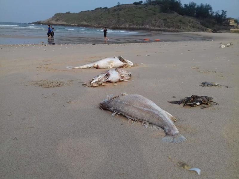 Ngư dân 4 tỉnh miền Trung đang gặp nhiều khó khăn sau sự cố môi trường do Formosa gây ra - Ảnh: VGP.<br>