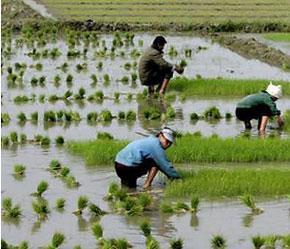 Nông dân Hàn Quốc có thể sẽ mất khoảng 130.000 việc làm và thiệt hại 2.000 tỷ Won (2 tỷ USD) sau khi FTA được ký.