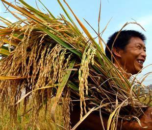 Hạ giá sàn gạo xuất khẩu để khơi dòng cho lúa hè-thu giúp nông dân bán được lúa hay tiếp tục giữ giá sàn? Đây là bài toán chưa có lời giải dành cho những người hoạch định chiến lược xuất khẩu gạo.