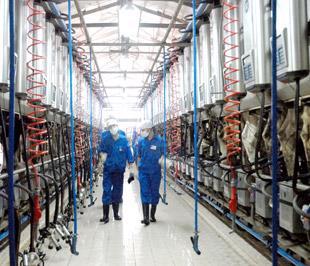 Hệ thống máy vắt sữa tự động của Vinamilk.