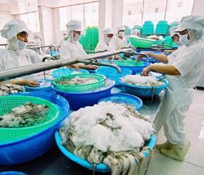 Trong 6 tháng vừa qua, vẫn có 33 lô hàng thủy sản Việt Nam bị cảnh báo dư lượng chất Chloramphenicol.