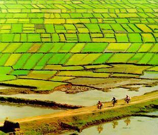 Hiện nay, nước ta có tổng diện tích đất nông nghiệp - không bao gồm đất lâm nghiệp - là hơn 10 triệu ha, với khoảng 70 triệu thửa đất và gần 14 triệu hộ nông dân - Nguồn ảnh: Agro Info.