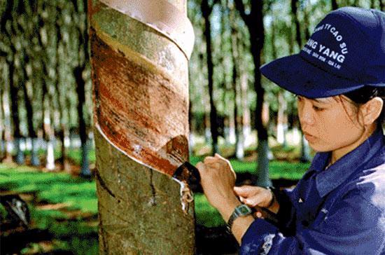 Theo VRG, phần lớn các khu công nghiệp được chuyển từ đất trồng cao su sang, tập trung ở các tỉnh Đồng Nai, Bình Dương, Tây Ninh, Tp.HCM, chi phí đầu tư rẻ, triển khai giao đất cho nhà đầu tư nhanh.