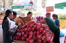 Du khách đang chọn mua thanh long tại Lễ hội Trái cây Nam Bộ 2010, đây là sản phẩm trái cây Việt Nam xuất khẩu mạnh sang Trung Quốc trong những năm qua - Ảnh: Tường Vi.