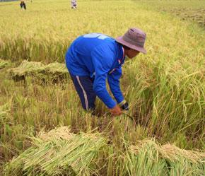 """Hiện có nhiều động thái cho thấy, khu vực nông nghiệp, nông thôn vẫn tiếp tục nằm """"ngoài rìa làn sóng phát triển"""" của đất nước."""