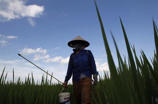 """Hai """"nút thắt"""" lớn nhất đang tồn tại hiện nay trong vấn đề tích tụ ruộng đất là nên tích tụ theo hình thức mua đất hay thuê đất, và xử lý vấn đề lao động nông nghiệp thế nào khi họ rút ra khỏi thị trường này? - Ảnh: Reuters."""