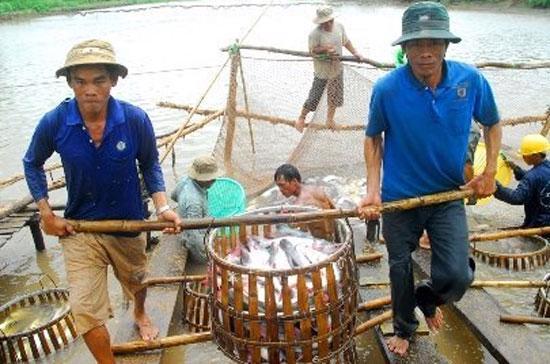 Thủy sản trong nước thiếu nguyên liệu nên doanh nghiệp phải nhập khẩu nhưng gặp rắc rối khâu kiểm dịch - Ảnh: TL.