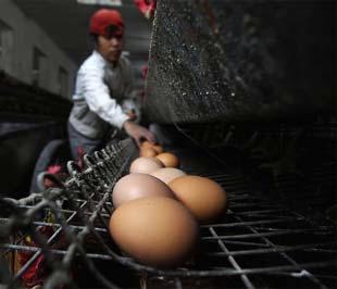 Bột trứng cũng nằm trong nhóm nguyên liệu phải lấy mẫu kiểm tra melamine - Ảnh: Reuters.
