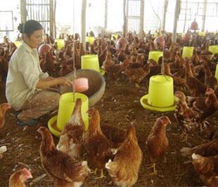 Nông dân được ưu ái khi tất cả nông sản làm ra khi đem bán đều không phải nộp thuế cho Nhà nước.