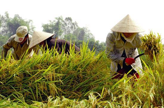 Bởi diện tích canh tác thấp, nông dân ít có nhu cầu mua máy nông nghiệp, trong khi rất cần vốn để mua vật tư.