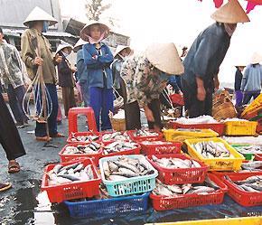Vấn đề kháng sinh trong thủy sản vẫn chưa được giải quyết triệt để - Ảnh: Việt Tuấn.