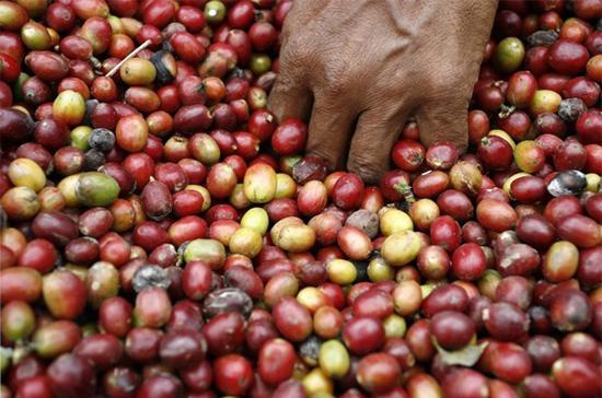 """""""Việc một doanh nghiệp ở Trung Quốc đăng ký nhãn hiệu cà phê Buôn Ma Thuột sẽ khiến sản phẩm cà phê chính hiệu Buôn Ma Thuột của Việt Nam sẽ bị kiện hoặc bị ngăn chặn xuất khẩu ngay tại cửa khẩu biên giới các nước do xâm phạm độc quyền nhãn hiệu"""" - Ảnh: Reuters."""