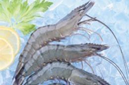 MPC dự kiến kim ngạch xuất khẩu hợp nhất năm 2011 đạt 360 triệu USD.