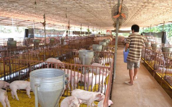 Cơ hội xuất khẩu chăn nuôi của Việt Nam đã tới nhờ đã ký được hiệp định thương mại với 12 nước.