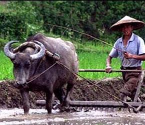 Chính phủ Trung Quốc đang thực hiện hàng loạt biện pháp khống chế giá lương thực và hỗ trợ, bảo đảm cuộc sống người nghèo, nhất là nông dân.