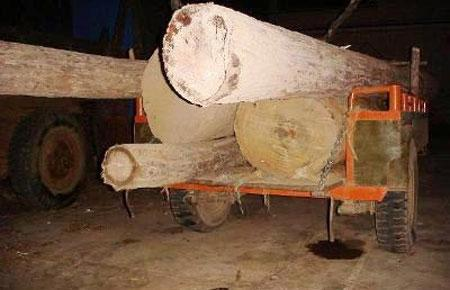 Trong những tháng cuối năm, ngành hải quan đang đẩy mạnh đấu tranh với các hành vi buôn lậu, gian lận thương mại ở các nhóm hàng có thuế suất cao, trị giá lớn, trong đó, gỗ quý cũng là một trong những nhóm hàng trọng điểm.