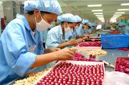 Hàng năm, các doanh nghiệp, cơ sở sản xuất thu hút khoảng hơn 1 triệu lao động - Ảnh: Việt Tuấn.