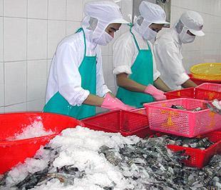 Năm 2004, kim ngạch xuất khẩu thủy sản của Việt Nam vào thị trường Nga mới chỉ đạt khoảng 30 triệu USD, đến năm 2008, con số này đã tăng vọt lên tới trên 200 triệu USD.