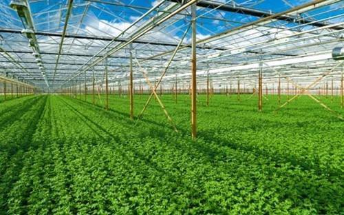 Viện Nghiên cứu nông nghiệp hữu cơ (FiBL) thống kê, diện tích sản xuất  nông nghiệp hữu cơ của Việt Nam đạt trên 43.000 ha, đứng thứ 56/172 nước  trên thế giới, thứ 3 trong ASEAN.
