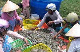 Nhiều loại thực phẩm trong nước tăng giá chóng mặt.