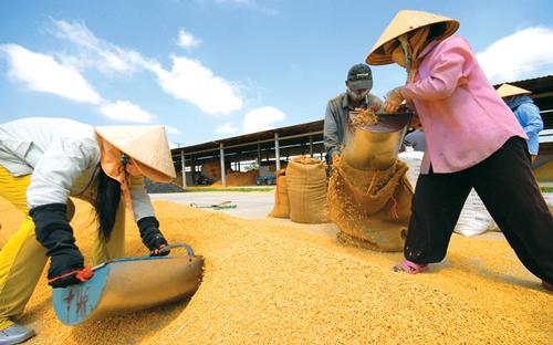 1/8/2017, khi Trung Quốc thay đổi chính sách thuế nhập khẩu  lương thực.