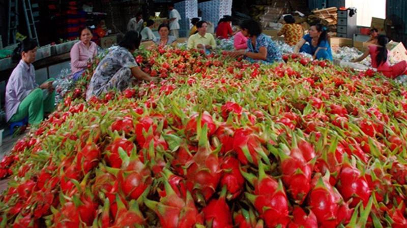 Hiện mới chỉ có 5 loại trái cây tươi của Việt Nam được cấp phép vào Mỹ đó là: vải, nhãn, chôm chôm, thanh long và vú sữa.