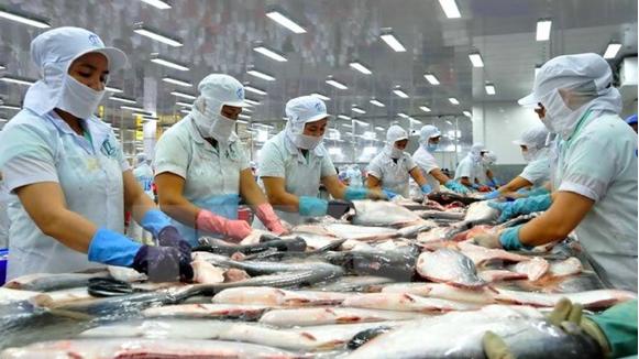 Chế biến cá tra xuất khẩu - ảnh minh họa.