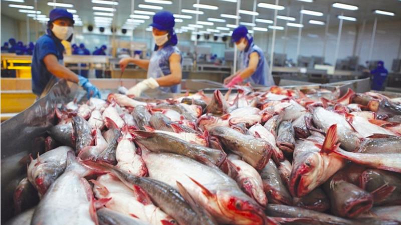 Xuất khẩu thủy sản của Việt Nam đạt trên 606 triệu USD, tăng 23,4% so với cùng kỳ năm trước.