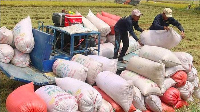 Theo ước tính, xuất khẩu gạo năm 2020 của Việt Nam đạt 6,15 triệu tấn, trị giá đạt khoảng 3,07 tỷ USD.