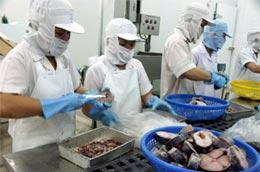 Để có được sản phẩm xuất khẩu cần có sự liên kết từ người nông dân đến doanh nghiệp chế biến và công ty thương mại - Ảnh Hồng Văn.